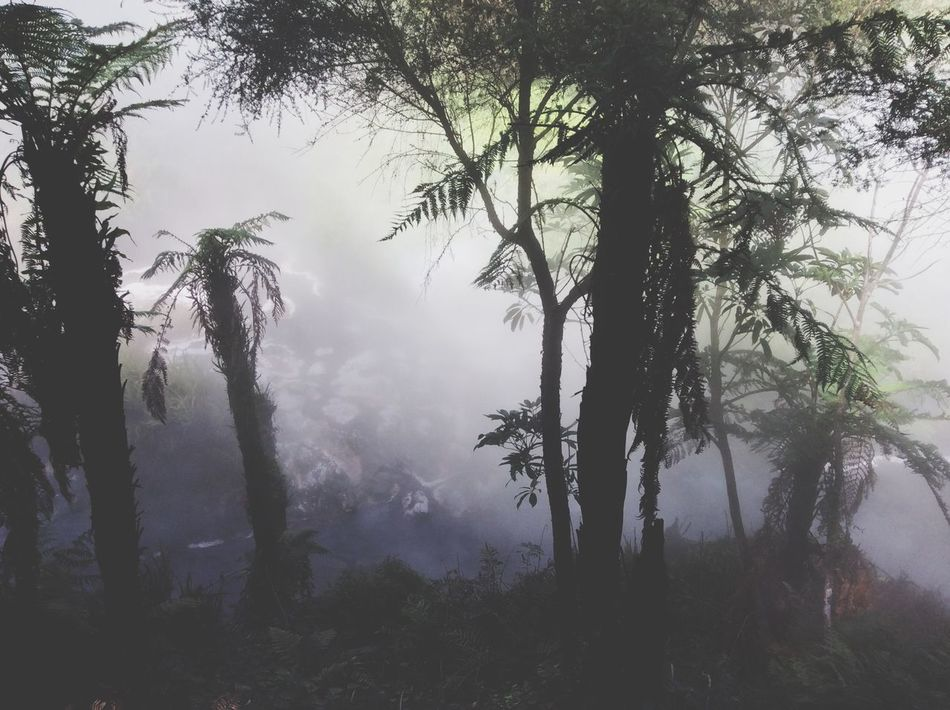 New Zealand Nature Monochrome Silhouette