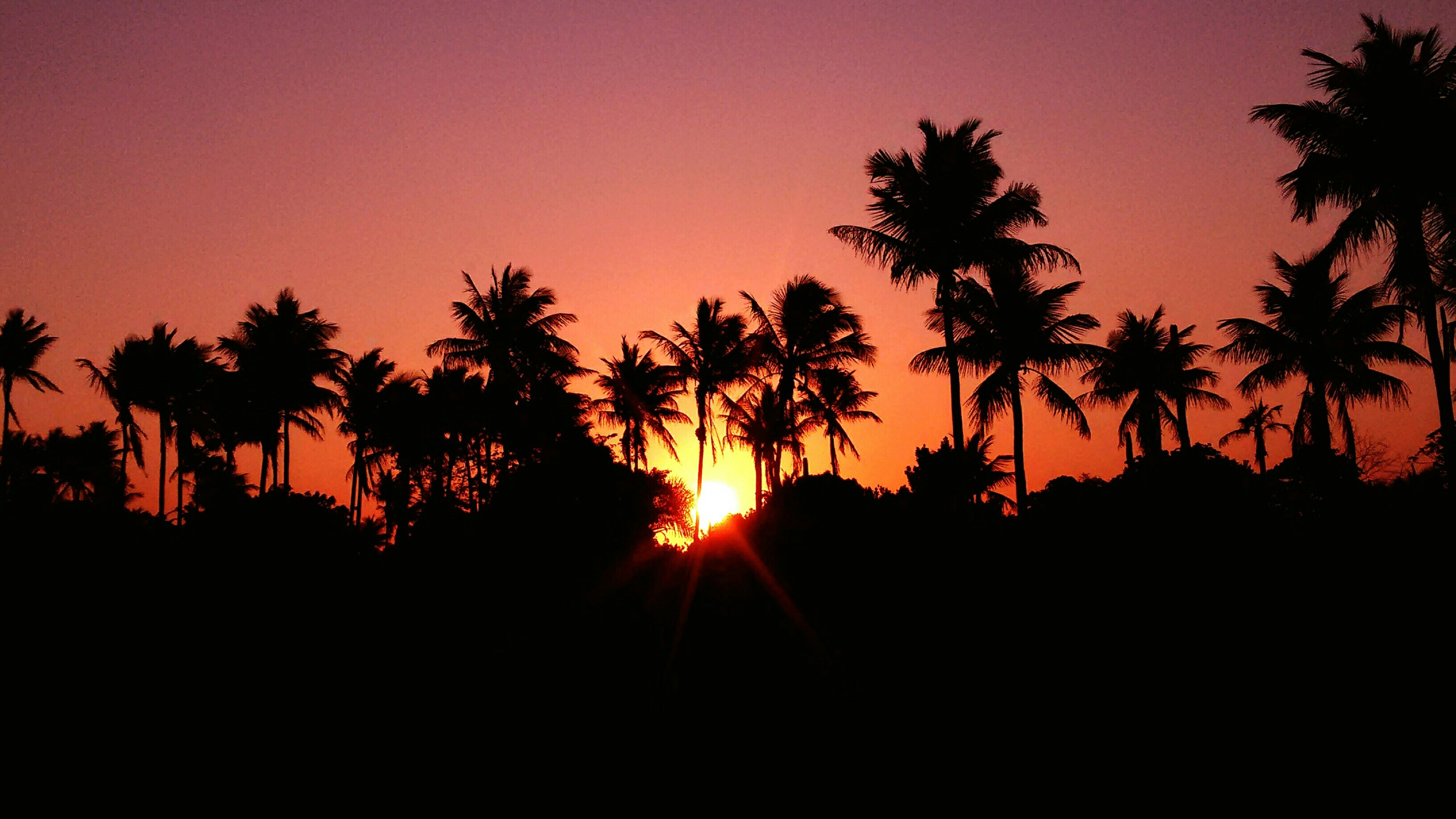 sunset, silhouette, palm tree, tree, sun, tranquility, tranquil scene, beauty in nature, orange color, scenics, clear sky, nature, idyllic, sunlight, copy space, sky, growth, outline, dark, back lit