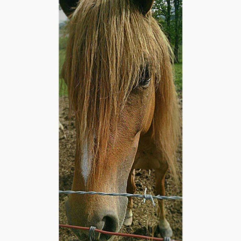my favorite horse :) Horse Helikescarrots Hedoesntkick Animal Animals Farm Farmlife Lovehim Picture Picoftheday Photo Photography Photographyofepic Justalittlephoto JustALittleHorse Justkidding Heshuge  Like Follow