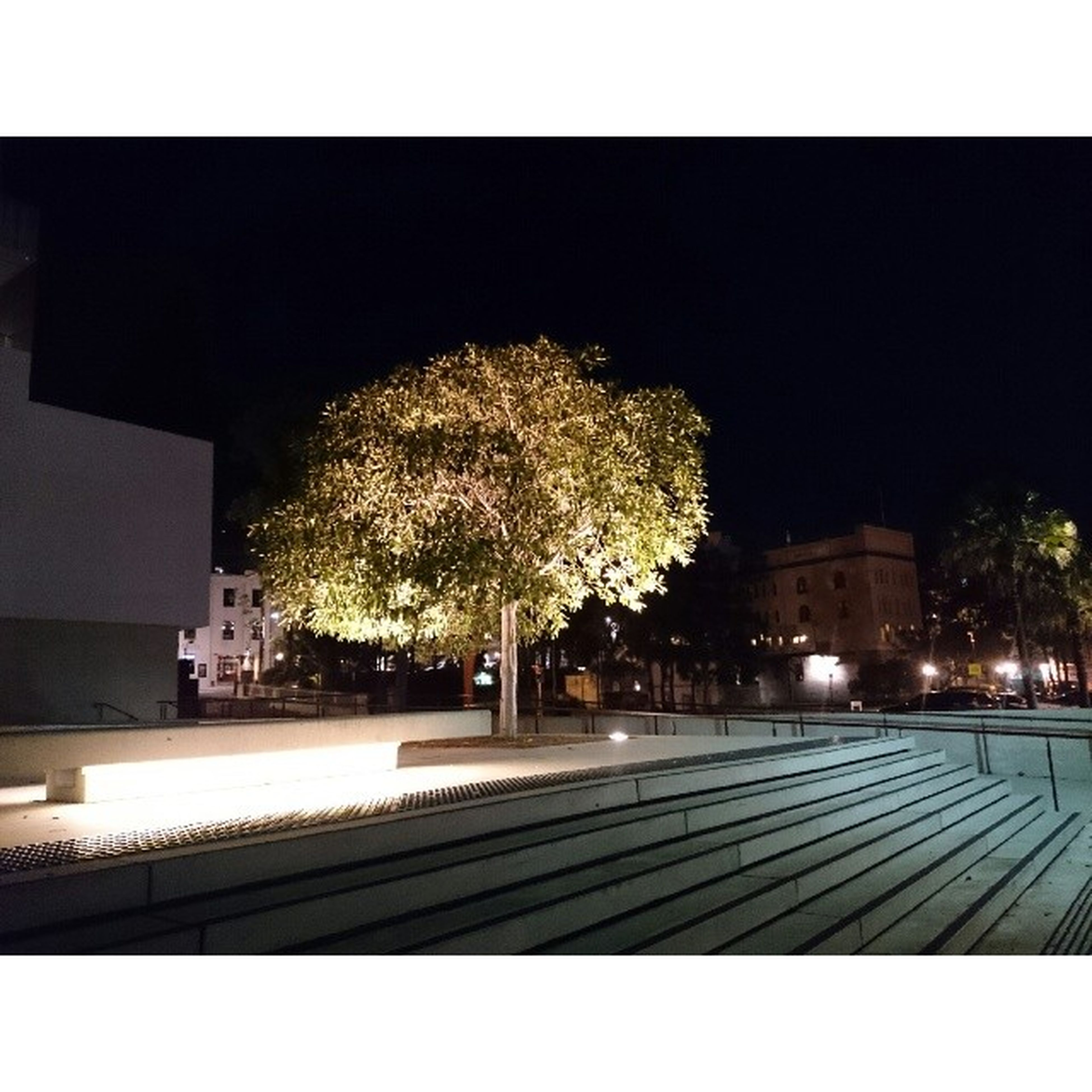 night, tree, illuminated, transfer print, architecture, built structure, auto post production filter, building exterior, transportation, road, street light, clear sky, sky, outdoors, city, no people, growth, lighting equipment, street, the way forward