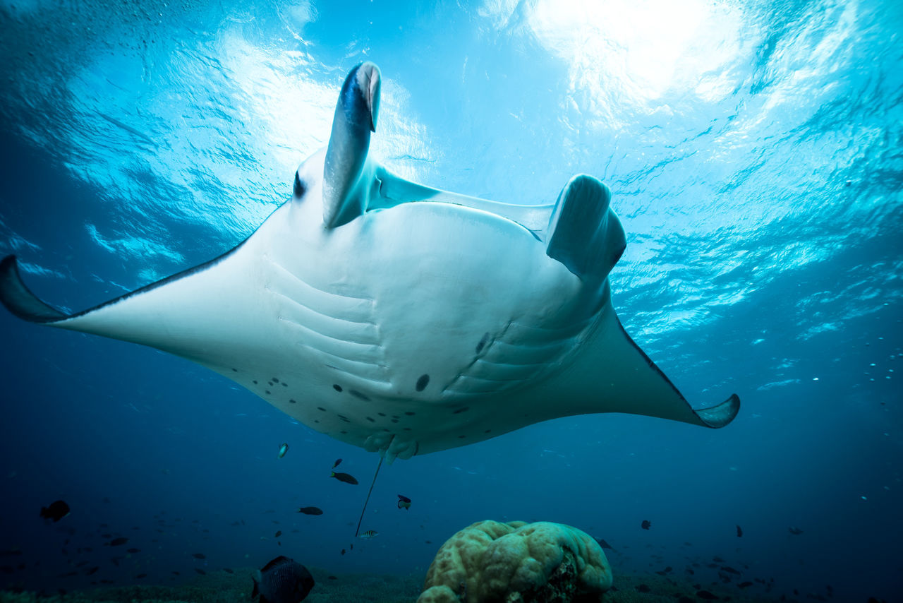Beautiful stock photos of underwater, Animal Themes, Animals In The Wild, Beauty In Nature, Blue