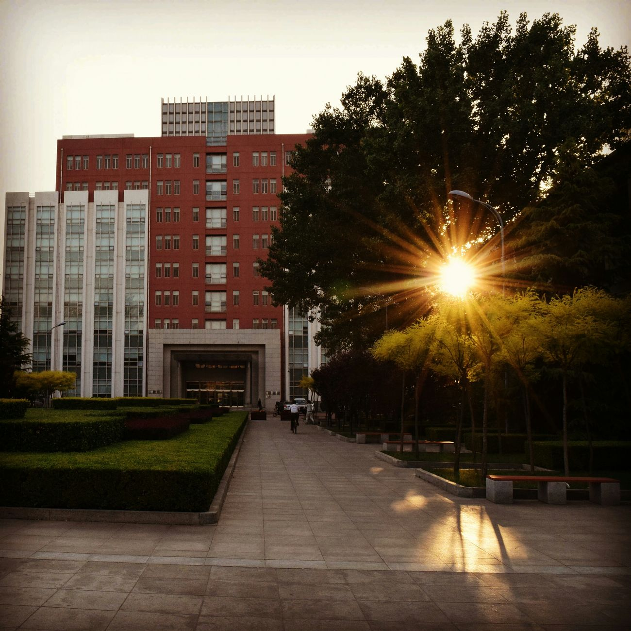 Sunset through the trees Cool Evening Summer Tianjinmedicaluniversity Tianjin China Indian Classroombuilding Nikon D5300