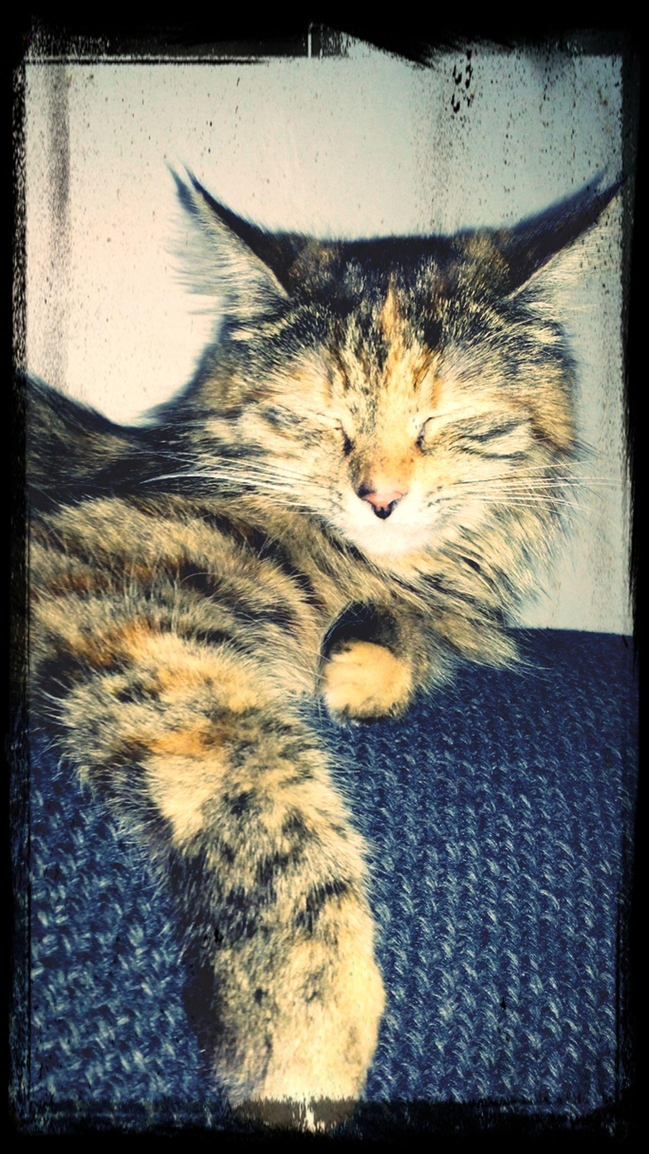 KittyKat