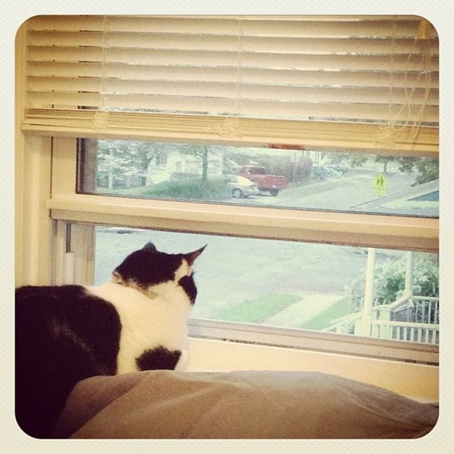 Watching out for puppies! Richardthecat Catsofinstagram Catwatch