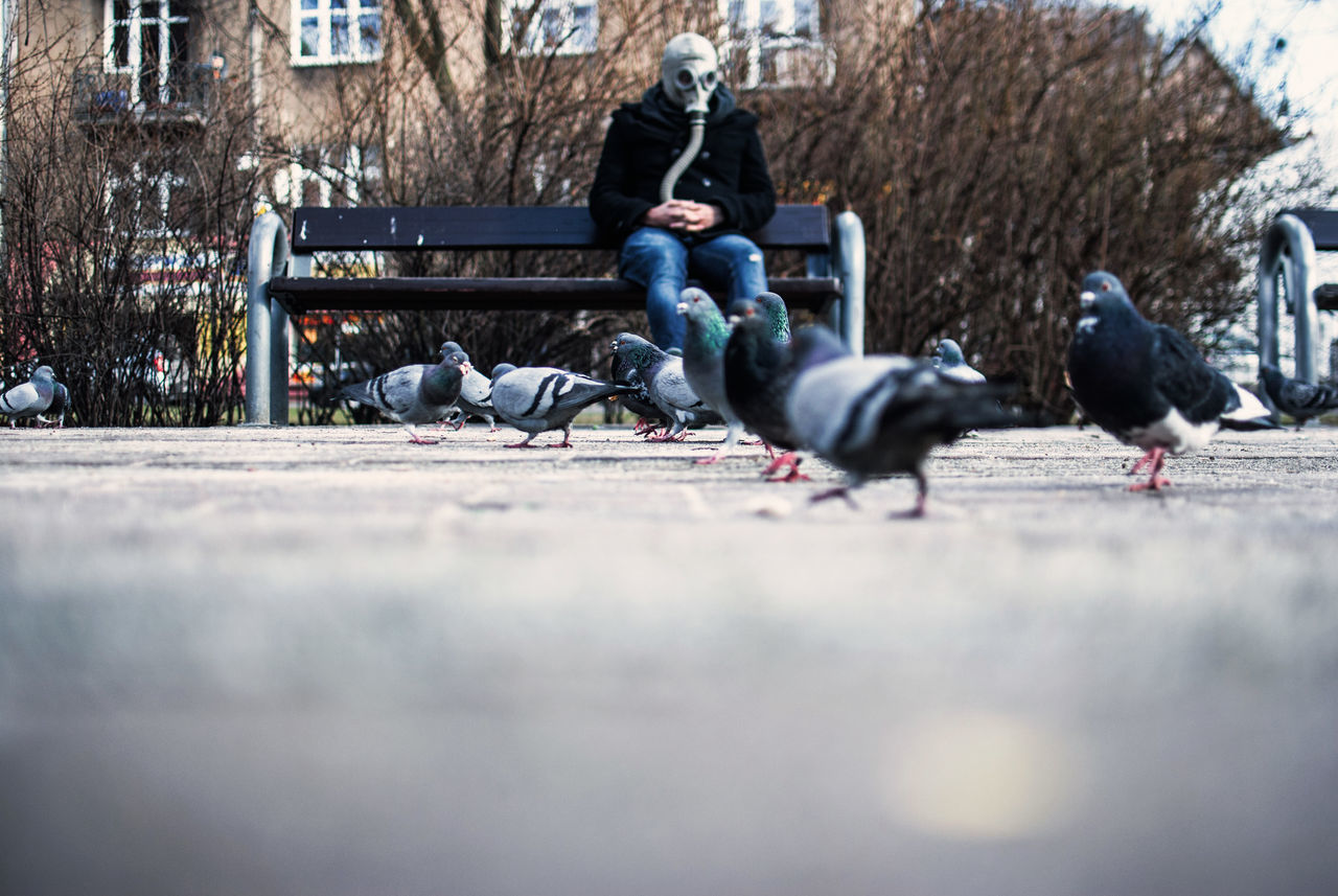 Adult Adults Only Bird Clean Air Day Discover Your City Editorial  Environment Gas Mask Journalism Light And Shadow Men Outdoors People Pollution Pollution In My World The Week Of Eyeem