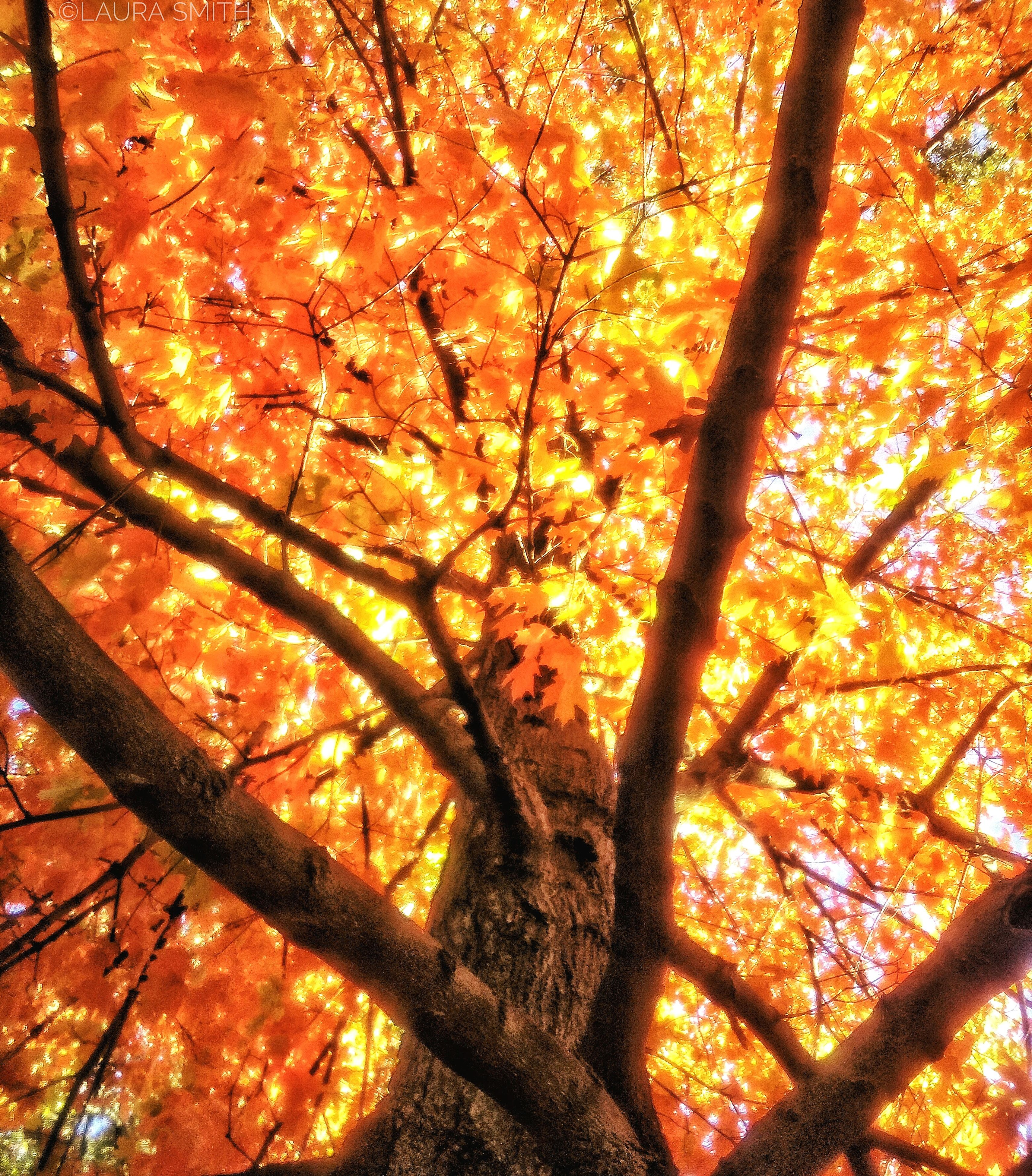 orange color, tree, nature, no people, sunset, beauty in nature, low angle view, outdoors, branch, close-up, backgrounds, day