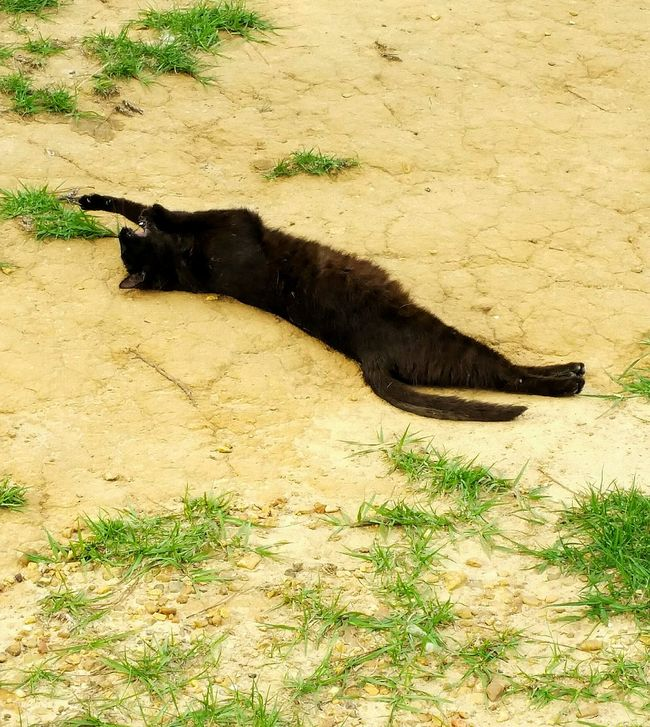 Cats Of EyeEm Black Cat Sunning Sunbathing Cat Napp Cat Napping Lazy Day Taking A Sunbathe Cat Lovers Animal Photography Cat Photography Stretching Yawning Natural Light Photo