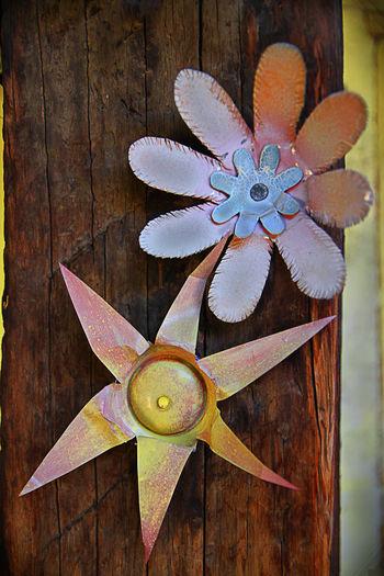Arizona Art Art And Craft Close-up Desert Eric Barnes Photography Flower Leaf Multi Colored No People Southwest  Still Life Pastel Power