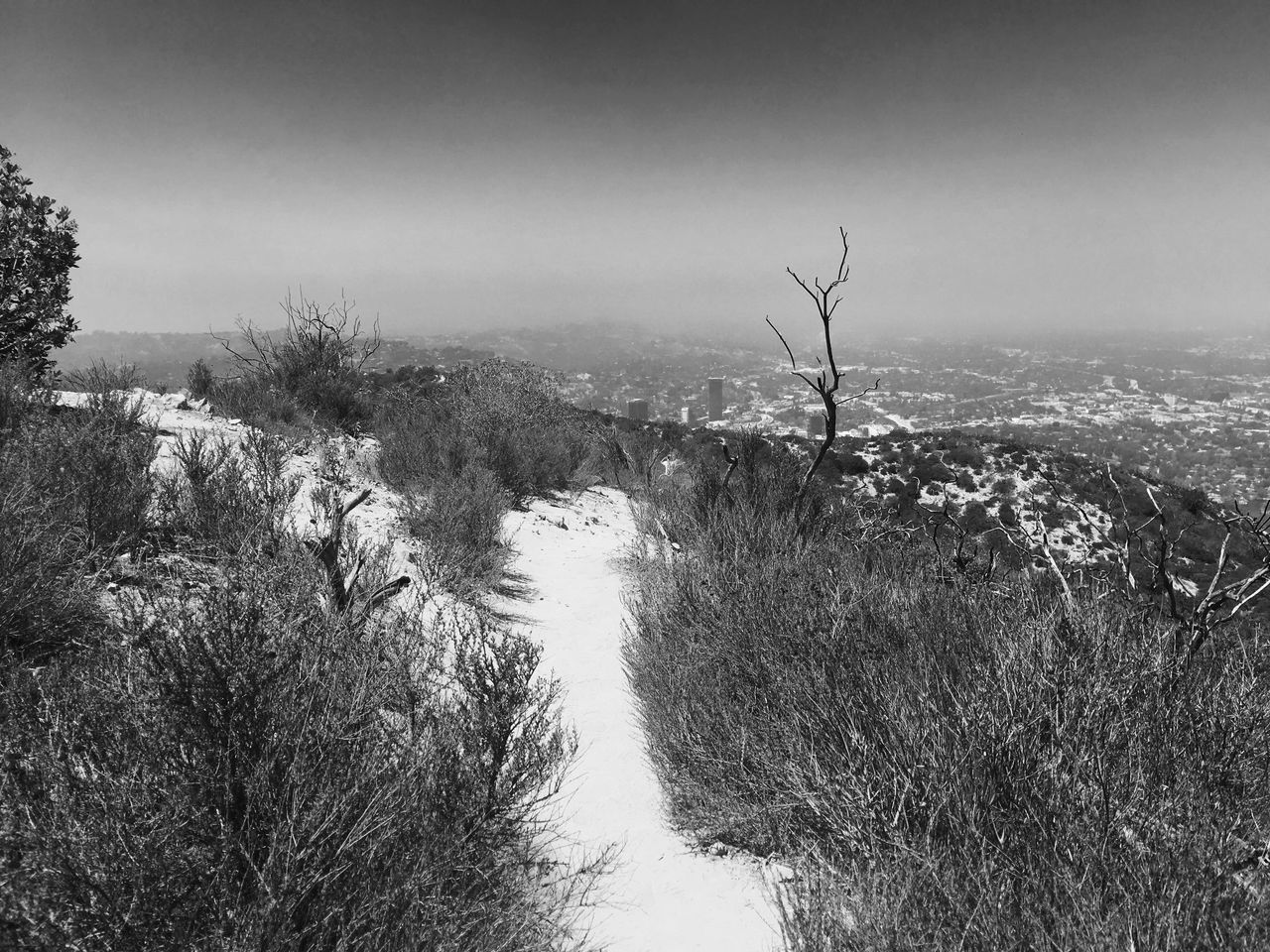 Hollywood Hills Beauty In Nature California Day Film Noir Growth Hiking Hollywood Hills Los Ángeles Monochrome Nature No People Outdoors Plant Scenics Sky Tree Water