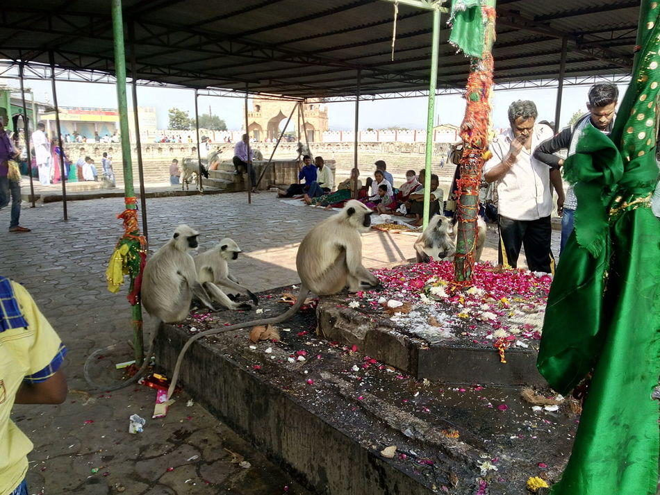 Heyyyy Traveling Having Fun Monkeys Temple Wildlife Photography EyeEm Show Case EyeEm Best Shots EyeEm Gallery Best Of EyeEm Week On Eyeem EyeEm World Club Photo 🌎📷 But Still A Lot To See In Nagpur,India