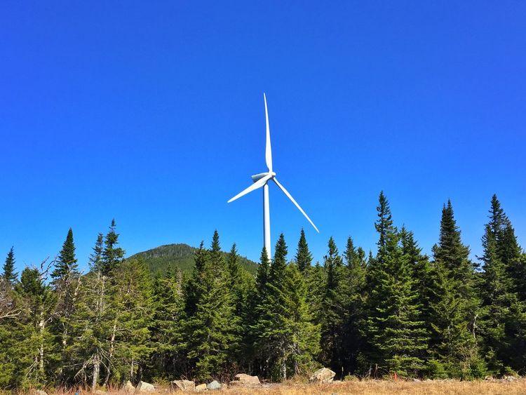 Blue Skies Green Forest Wind Turbine Nature Maine