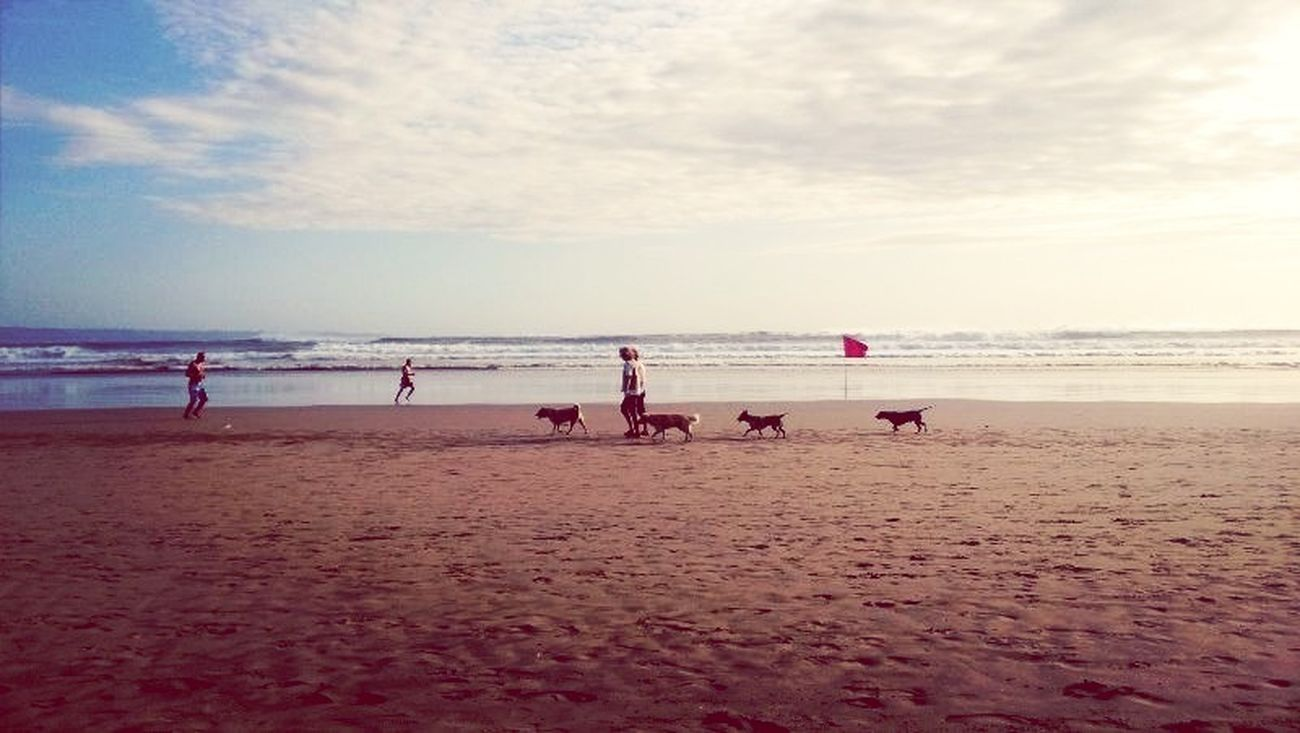 empat anjing Enjoying Life