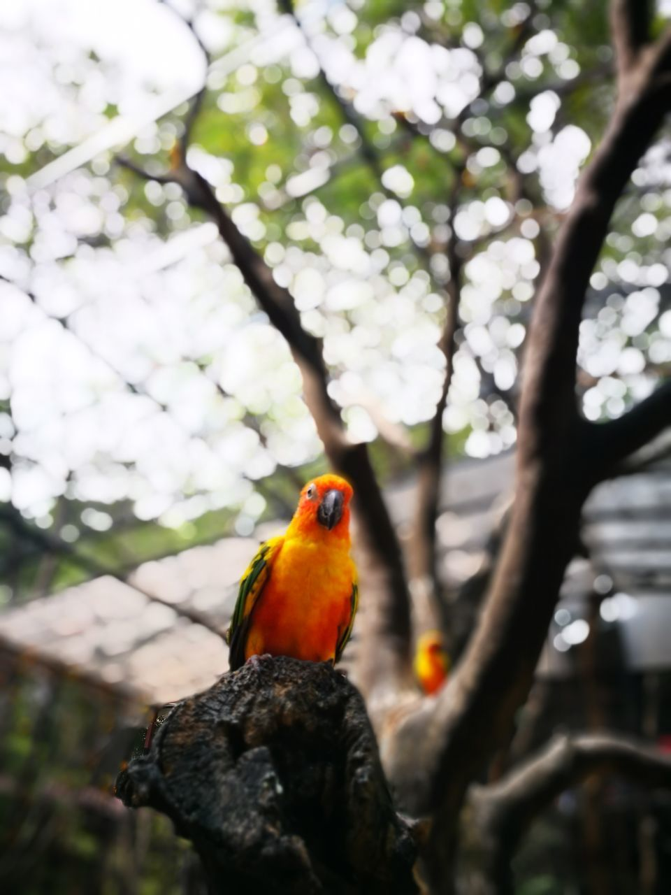 bird, animals in the wild, tree, animal wildlife, animal themes, one animal, perching, nature, day, branch, beauty in nature, parrot, no people, outdoors, rainbow lorikeet, close-up