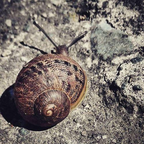 Snail Bug Concrete Backyard Garden Wmm_brown 9vaga_letters9