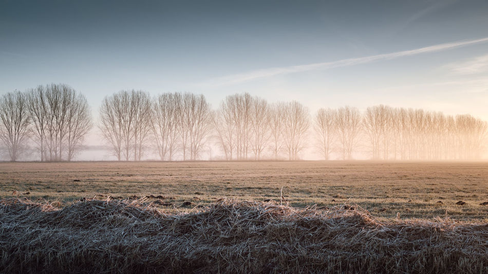 Misty sunrise on a field in Brandenburg, Germany Agriculture Bare Tree Beautiful Nature Beauty In Nature Brandenburg Cold Morning Day Fog Foggy Sunrise Germany Golden Landscape Golden Light Growth Landscape Misty Landscape Misty Sunrise Nature No People Outdoors Philipp Dase Scenics Sky Tranquil Scene Tranquility Tree