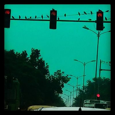 Waiting for the signals to turn green before flying off? Traffic Birds Delhi