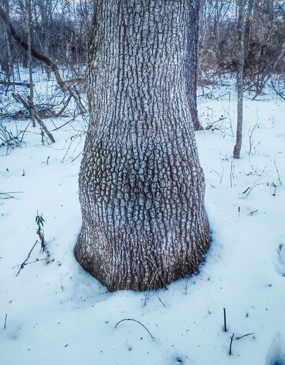 A mid life tree look! The Hundred Acre Woods A Walk In The Woods