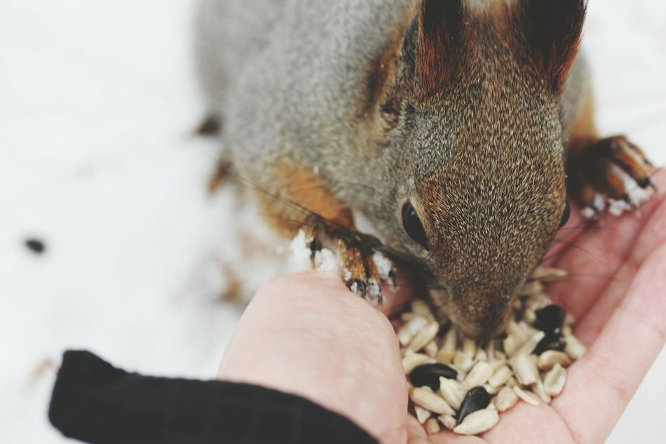 Beautiful stock photos of eichhörnchen,  A Helping Hand,  Animal Head,  Animal Themes,  Animals In The Wild