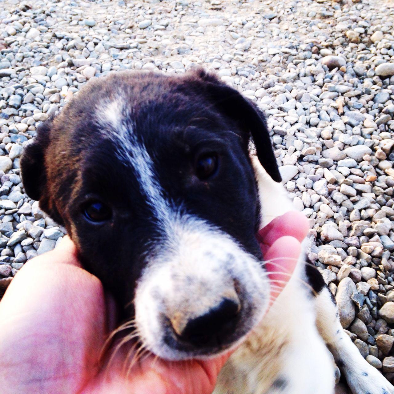 For The Love Of Pets Pet Photography  Cute Pets Petslife Pets Daily Petsofeyeem My Pets :)