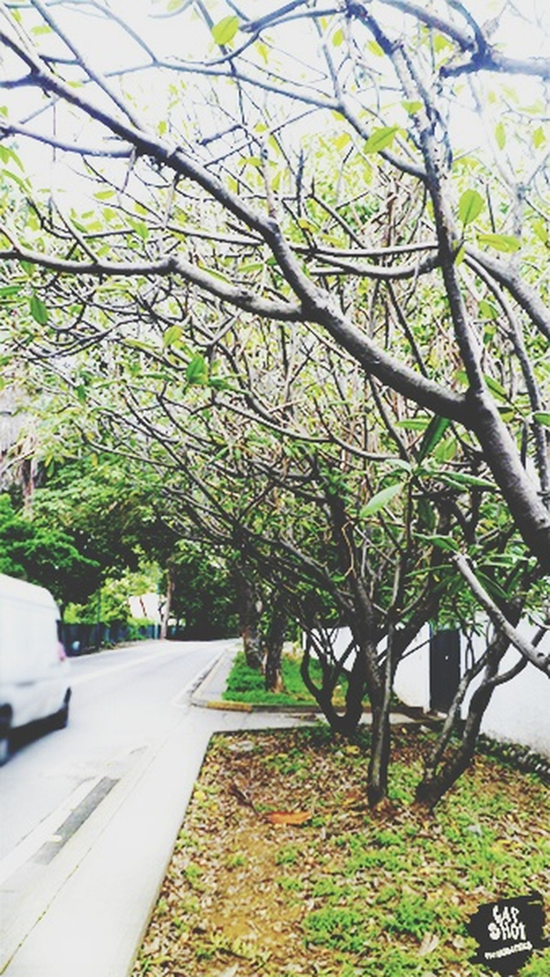 tree, growth, green color, branch, nature, sunlight, day, plant, built structure, leaf, outdoors, transportation, building exterior, tree trunk, road, architecture, no people, tranquility, street, green