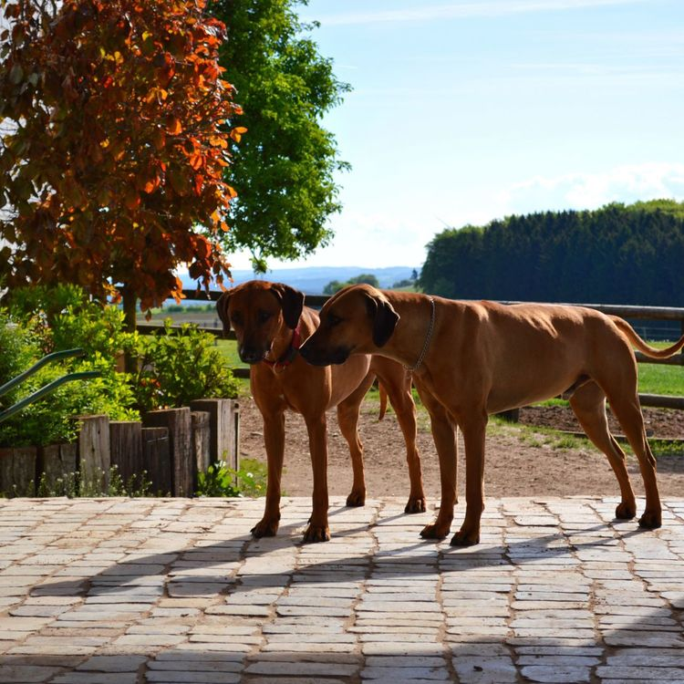 Animal Themes Tree Domestic Animals Outdoors Dog Day Sunlight Pets Nature Shadow No People Dogs Hunde Chiens