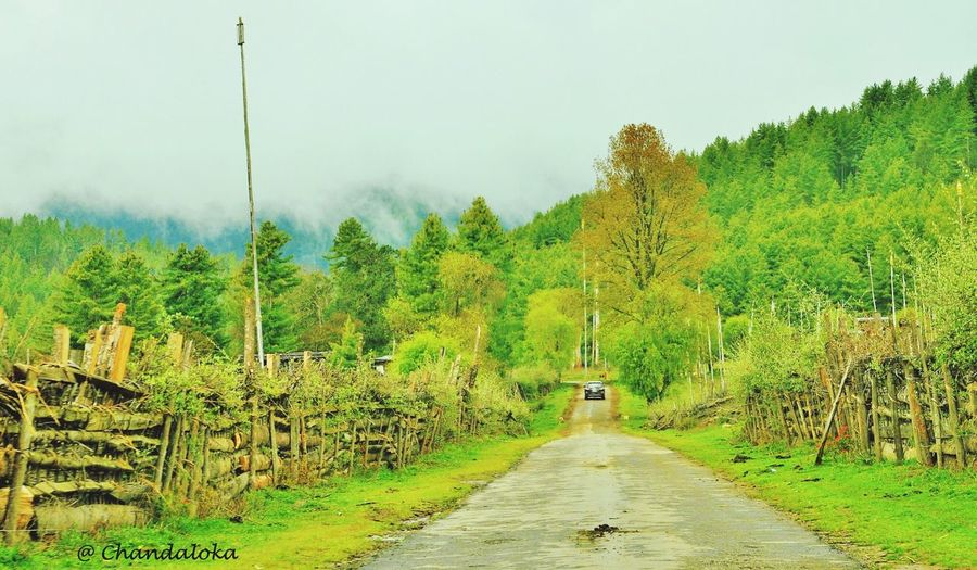 Tree Tranquil Scene Green Sky Nature ,in Bhutan