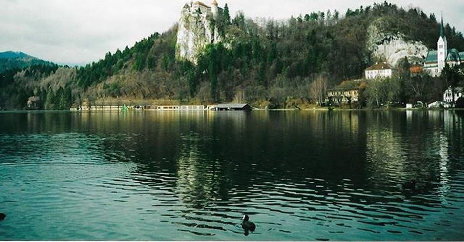 Bled Castle - One of my favourite places in the world. Visited many moons ago but been quite eager to go back. Bled BledCastle Scannedphoto Nostagia Lakebled Slovenia Lakebled Lake Reflections Blejskigrad Renaissance Castle Romanesque Romanesquearchitecture Duck