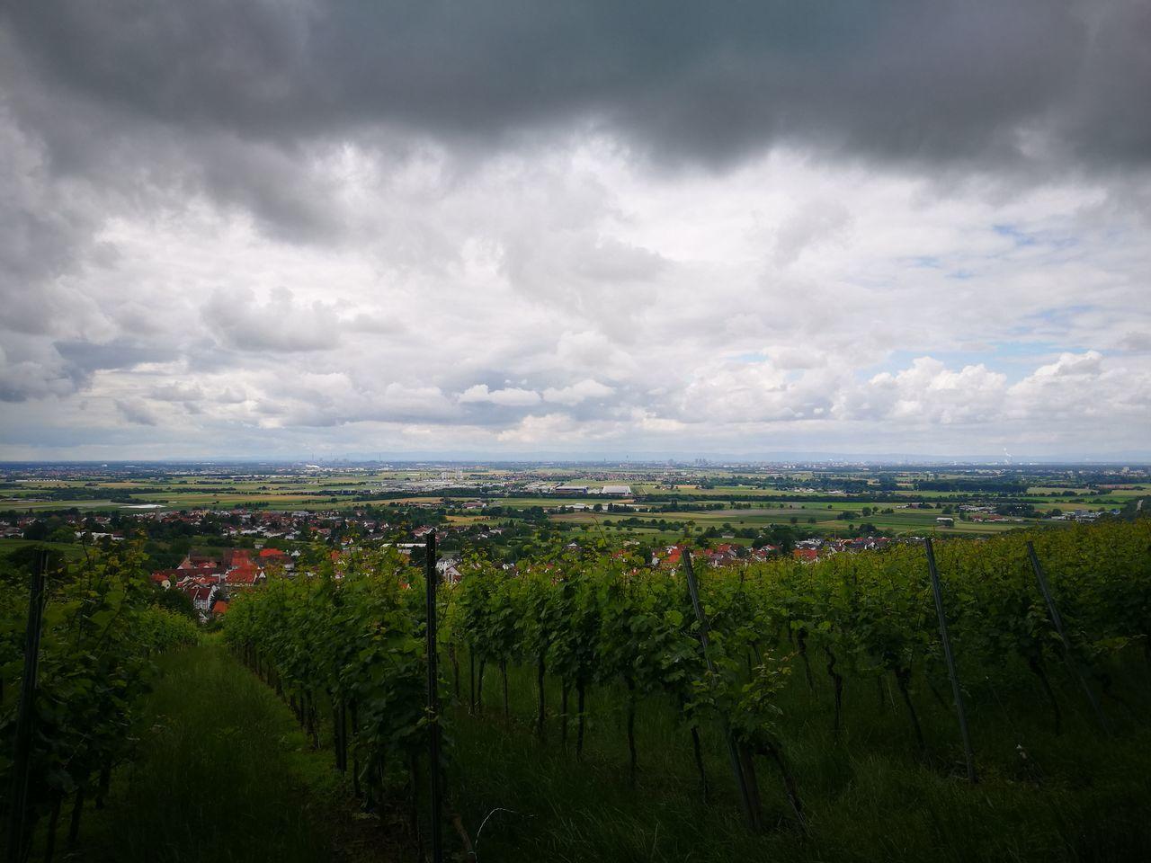 Summer 2016 Dark Clouds Vineyard Reben Schlechtes Wetter Wolken Hohensachsen Weinheim Burgenweg Wein