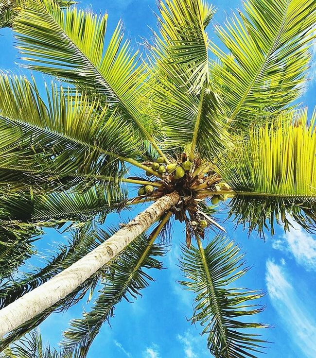 🌴 Palm Tree Low Angle View Tree Trunk Nature Tranquility Green Color Clear Sky Beauty In Nature Coconut Palm Tree Famous Places Iraq_photo Playground Equipment Photographylovers Famous Place Photography Photooftheday TakeoverContrast City Life No People Fountain Relaxation Design Growth The Way Forward Blurred Motion