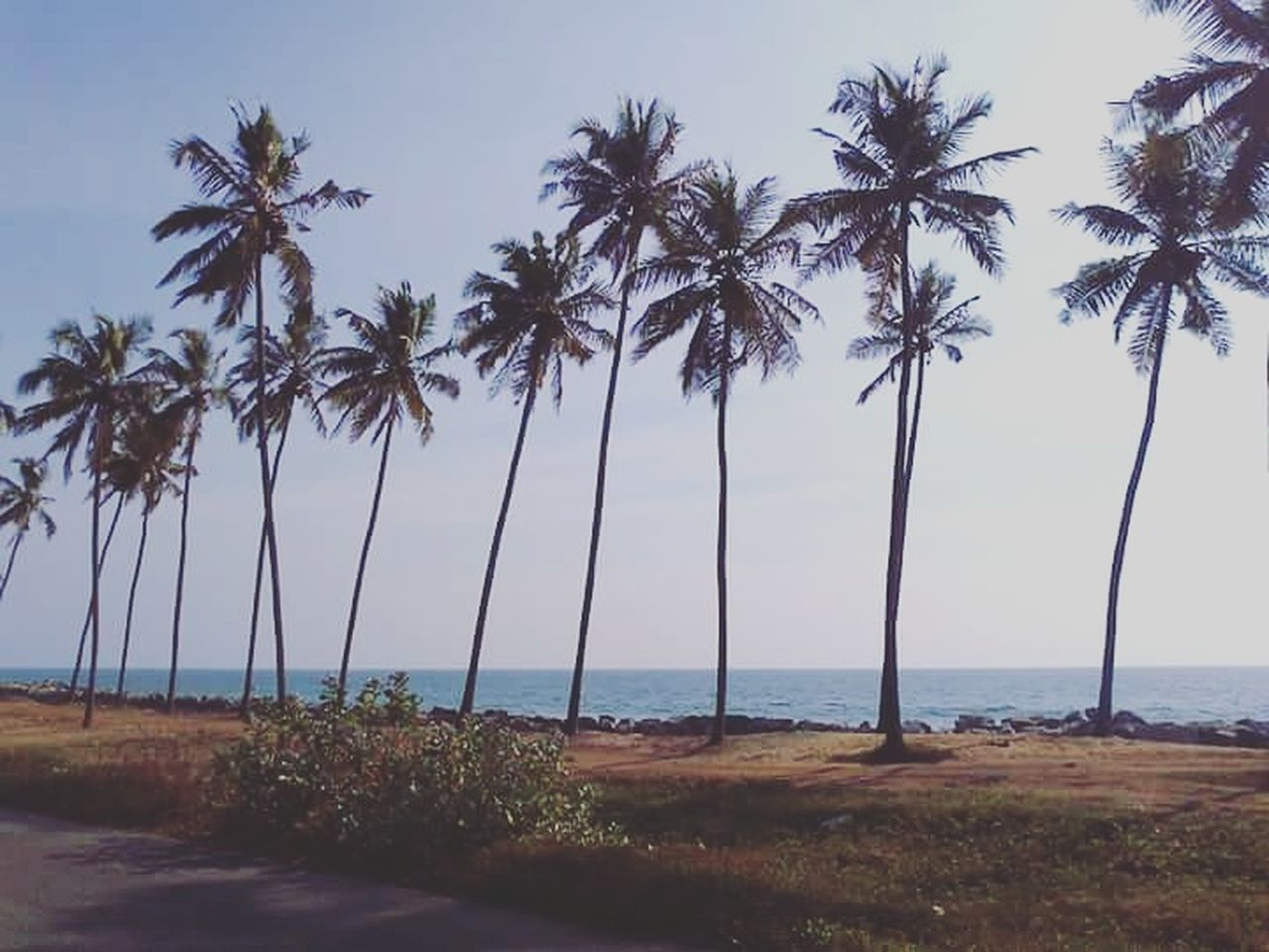 Nature Beach Cloud - Sky Beauty In Nature Landscape Travel Destinations Outdoors Coconut Trees Kappil, Beach, India 🇮🇳 Sea Mobile Photography Clear Sky