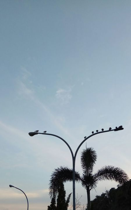 Birds of a feather flock together. Streetlights And Sky Outdoors Blue Sunset Naturephotography Birds Of EyeEm
