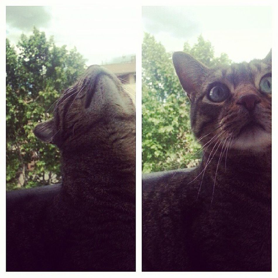 Hoy va de gatos, de lluvia y de pelis. ♡ ♡ ♡ Vivi Cat Catsofinstsgram Catoftheday love instacollage