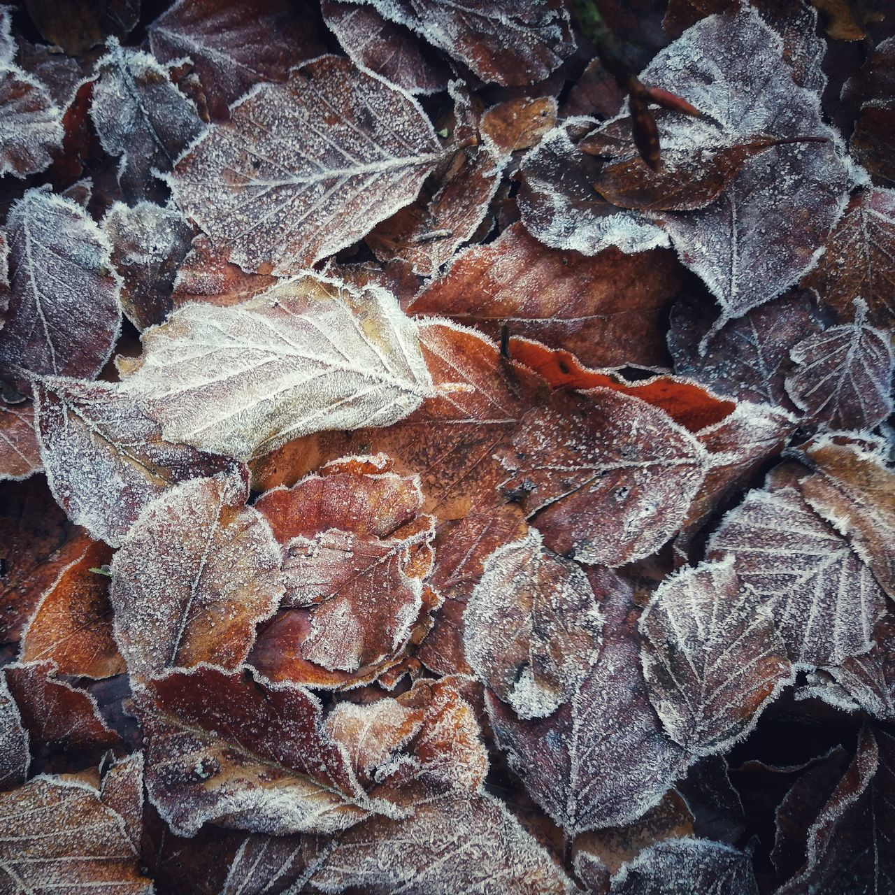 leaf, change, no people, nature, backgrounds, full frame, autumn, outdoors, day, close-up, fragility, beauty in nature