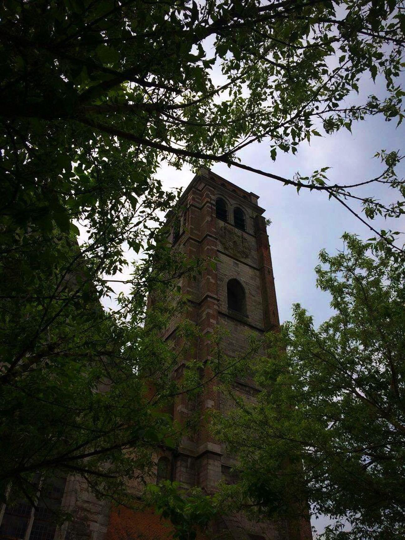 Belgium Belgique Tournai Nature Church Eglise Trees Architecture