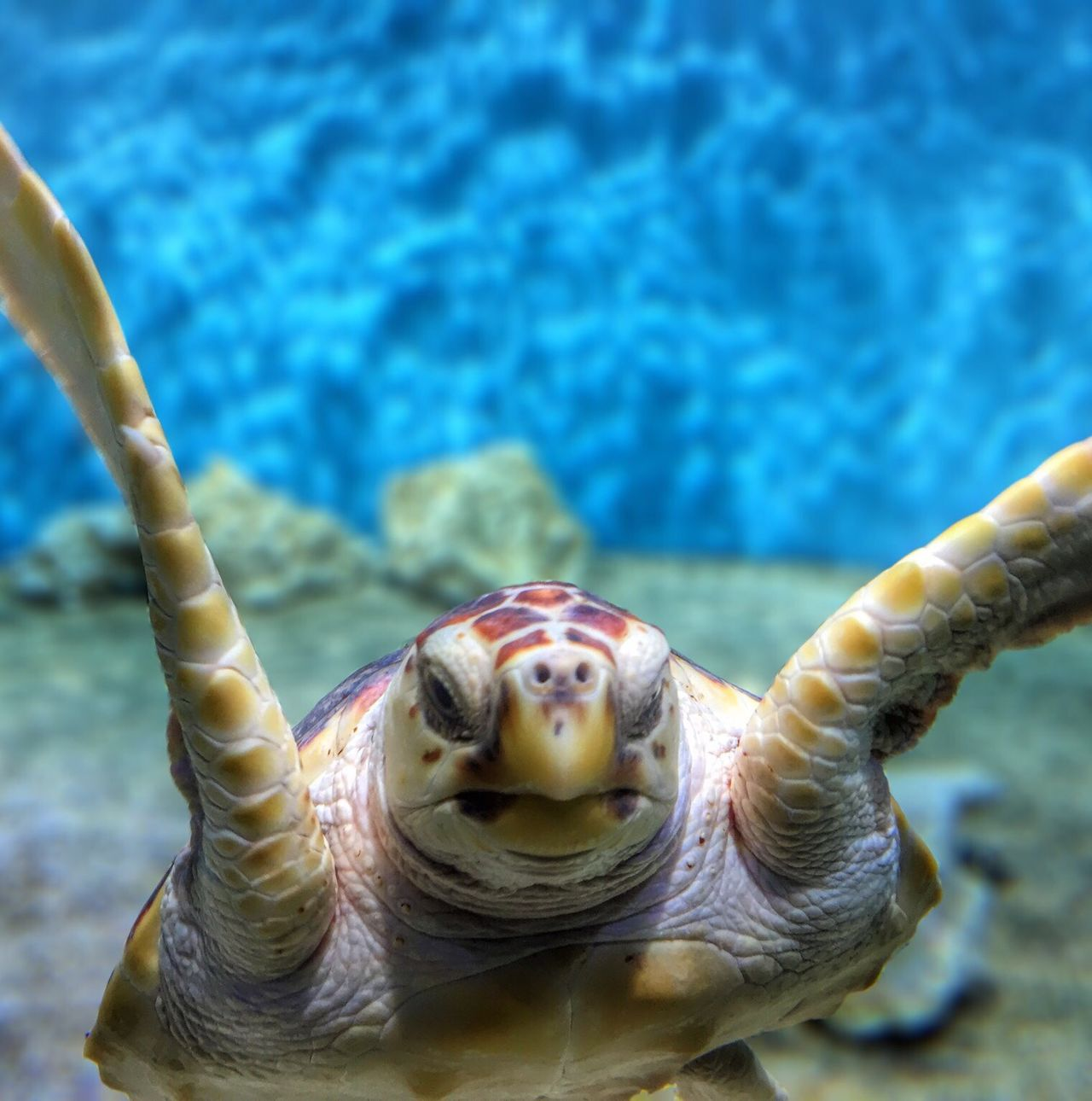 Beautiful stock photos of turtle, Animal Themes, Animals In The Wild, Beauty In Nature, Close-Up