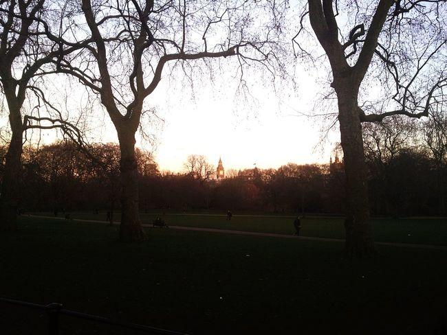London Lifestyle Tree Sunset Sky Outdoors Big Ben