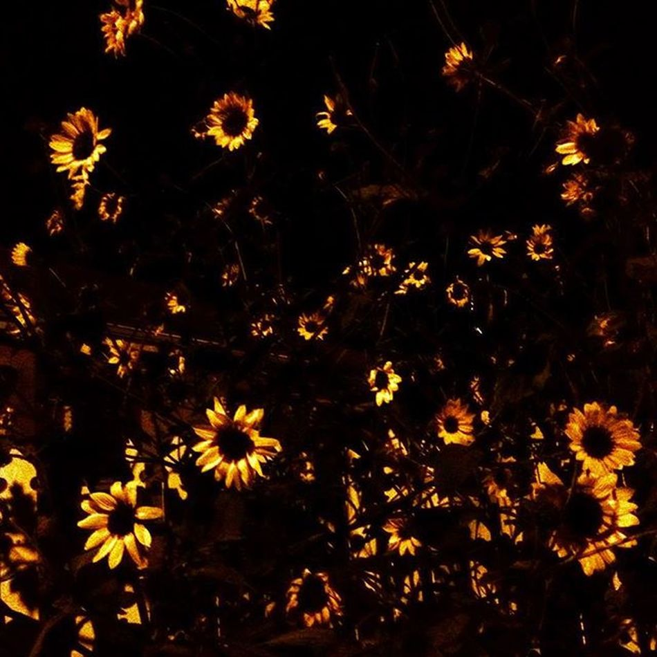 Cause you're a sky full of stars ✨ Such A Heavenly View Coldplay Sunflower Flower Flame Night Color Colors Yellow Black Love Art Israel Israelinstagram Instaisrael Insta_Israel Ig_daily Ig_today Ig_europe Ig_israel Ig_nature Ig_eurasia ig_flowers ig_exquisite ig_worldclub ig_global_life