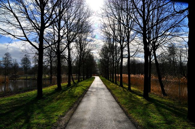 Shadows Shadows & Lights Silhouettes Tree Silhouette Shadows Of The World Path In Nature Depth Of Focus Depths Trees And Sky Path And Trees Symmetry Hello World Natural Pattern Natural Colours Patterns In Nature Silhoutte Photography Shadow Play Taking Photos Check This Out EyeEm Best Shots Nature On Your Doorstep EyeEm Nature Lover Path To Happines Enjoying Life Netherlands