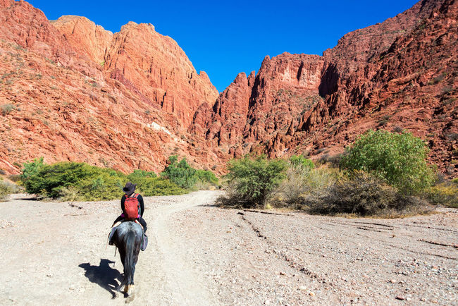 Young woman riding a horse through a dramatic red and green canyon near Tupiza in Bolivia Amazing Andes Beauty Bolivia Cactus Canyon Countryside Desert Destination Female Formation Formations High Hills Horse Landscape Mountain Nature Rock Rocks South America Travel TUPIZA Valley Woman