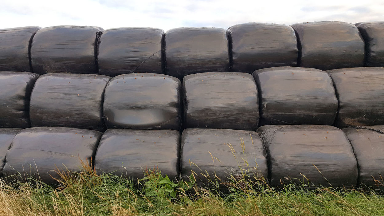 Silage cutting season Agriculture Black Plastic Farming Food For Livestock Grass Ready For Winter Silage Silage Bales Sky