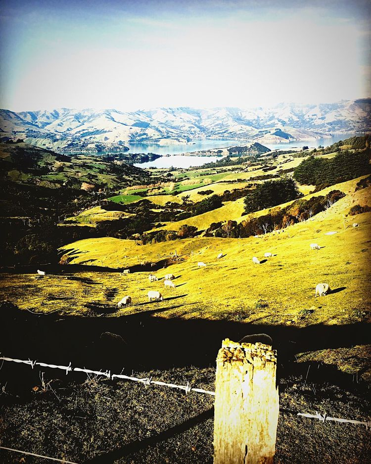 View of Akaroa & the Peninsula from the Hilltop Tavern  ~~ Harbour Inlet Ocean