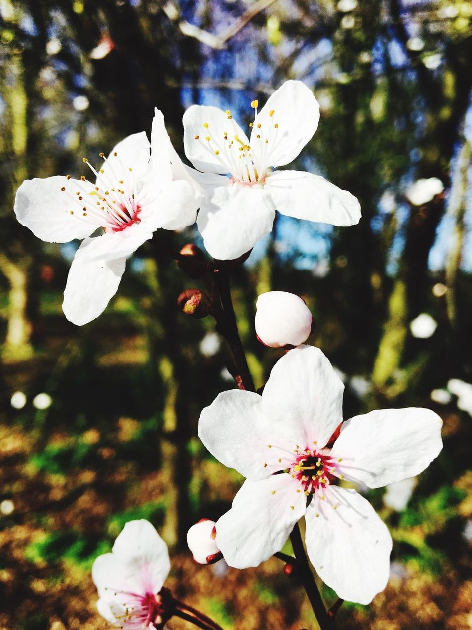 Summer time and the living is easy Flower Tree Green White Warm Spring Blurry Whiteflower Nicesmell Nature Beautiful Dayinthelife