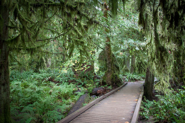 Beauty In Nature Boardwalk Branch Day Footpath Forest Green Color Growth Lush Foliage Narrow Nature Non-urban Scene Pathway Plant Scenics Solitude The Way Forward Tourist Attraction  Tranquil Scene Tranquility Travel Destinations Tree Tree Trunk Walkway WoodLand