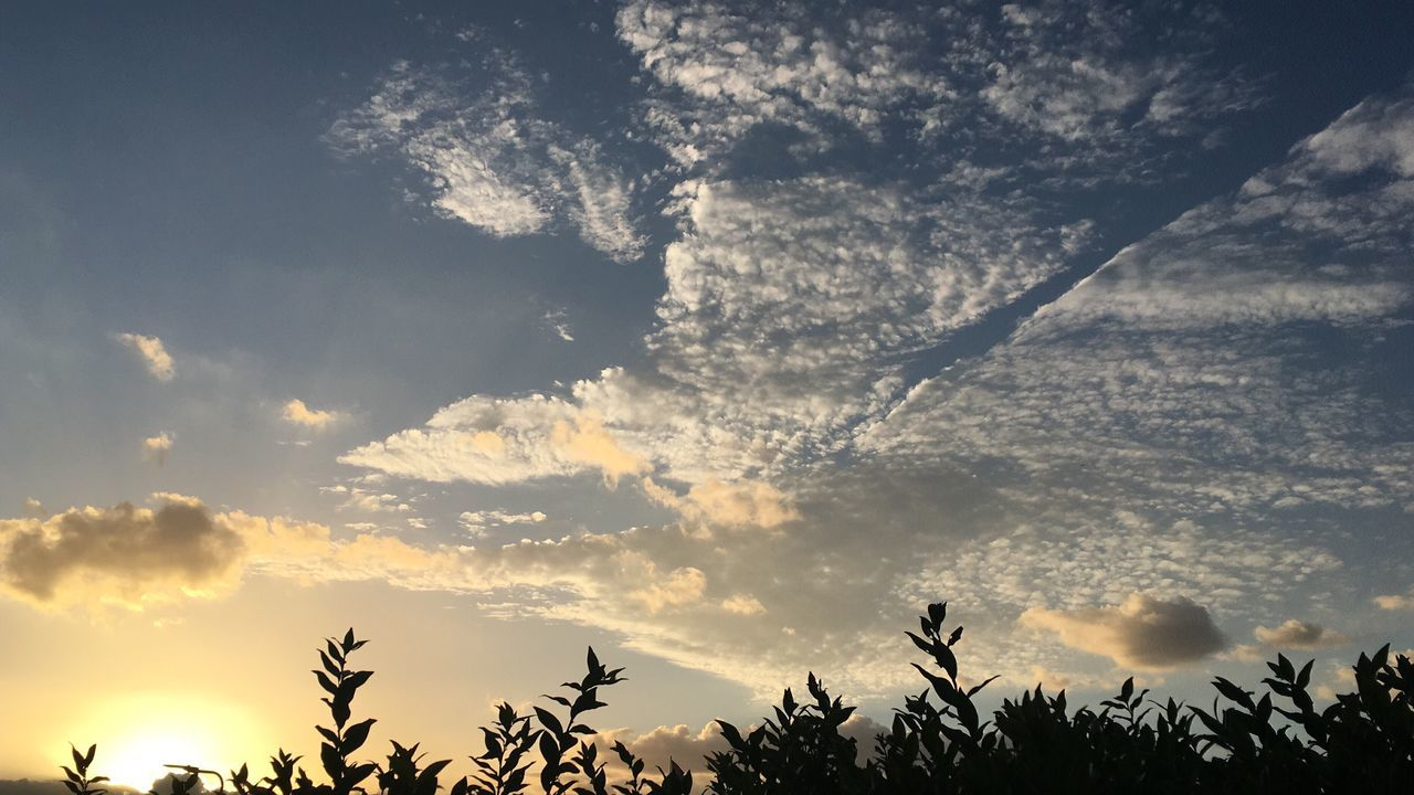 nature, sky, beauty in nature, cloud - sky, sunset, scenics, tree, silhouette, tranquility, tranquil scene, outdoors, no people, growth, low angle view, day