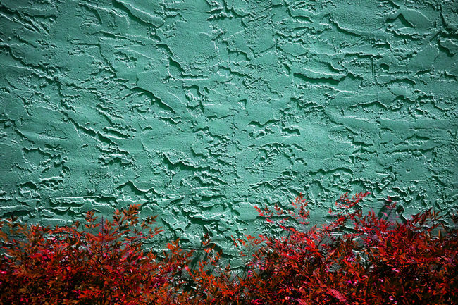 Backgrounds Beauty In Nature Blue Close-up Day Detail Full Frame Growth Natural Pattern Outdoors Redandblue Wall TakeoverContrast