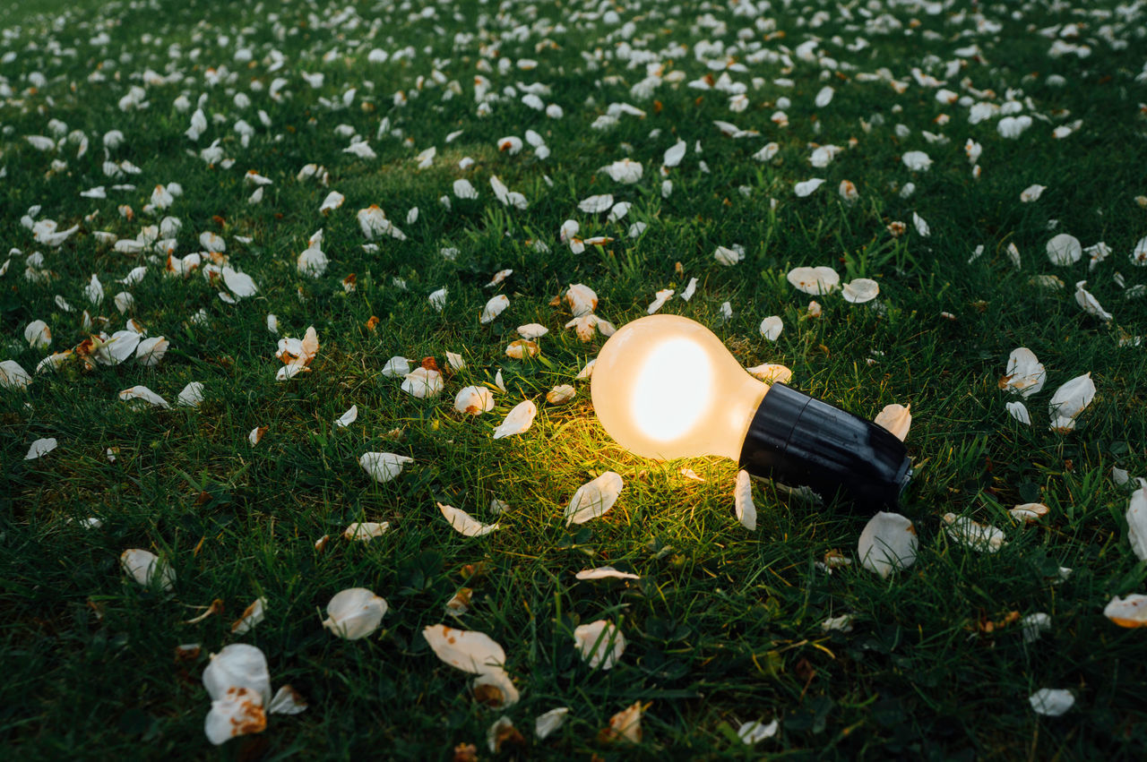 Light Lightbulb Wireless Sony SonyNEX5R Filter Lightroom GIMP Photo Editor Gimp Outdoors Leipzig Alpha Spring Green Tree No People Flower Day Garden The Great Outdoors - 2017 EyeEm Awards
