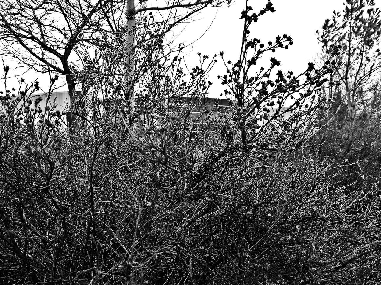 Taking Photos Learn And Shoot Black And White Shrubs Black And White Photography Black And White Collection  Black And White Nature Photography Shrubbery Winter Nature Outside Dead Treeporn Vaughan Canada