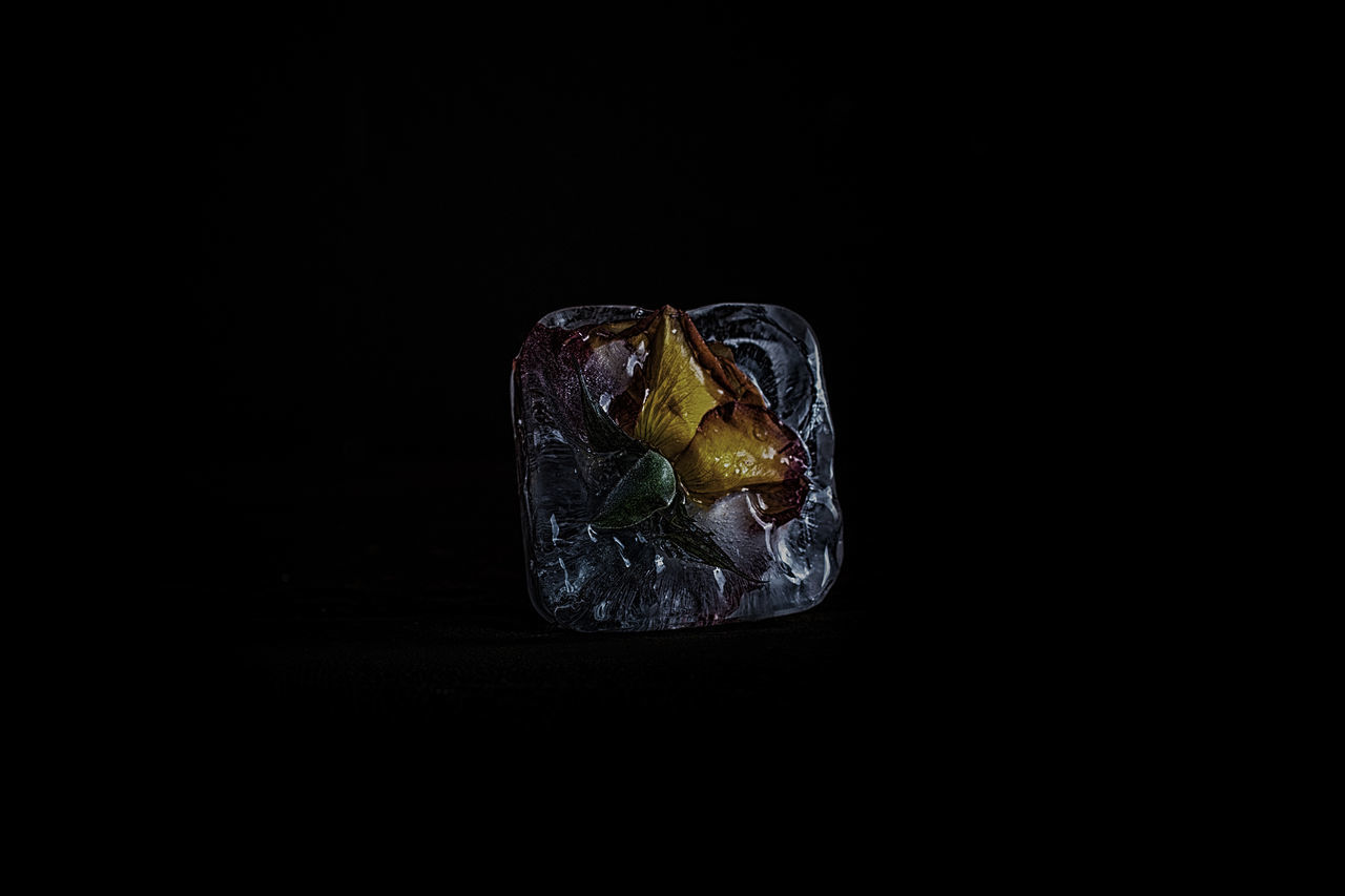 Playing with ice and Flower Black Black Background Flower Flower Power Flowerlovers Fragility Freeze Ice Studio Shot