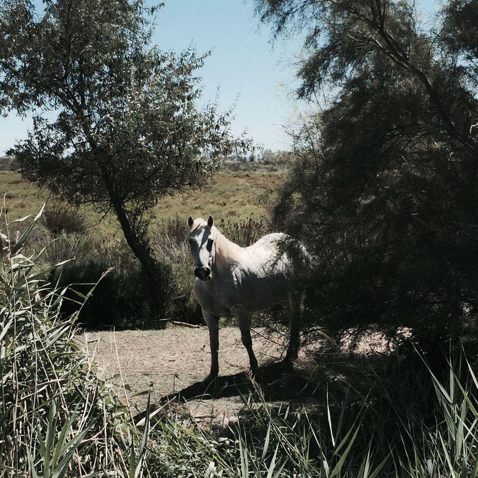 Horseture] Horses Animal Wildlife