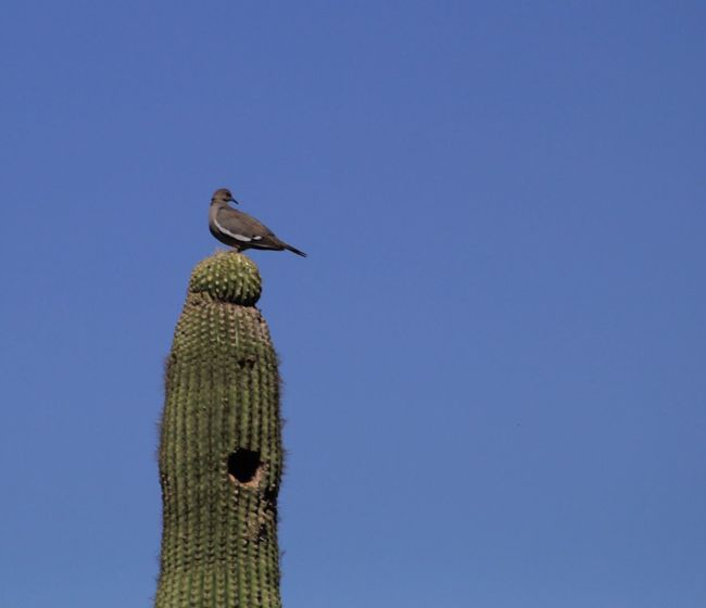 Arizona Cactus Birds Desert Arizona